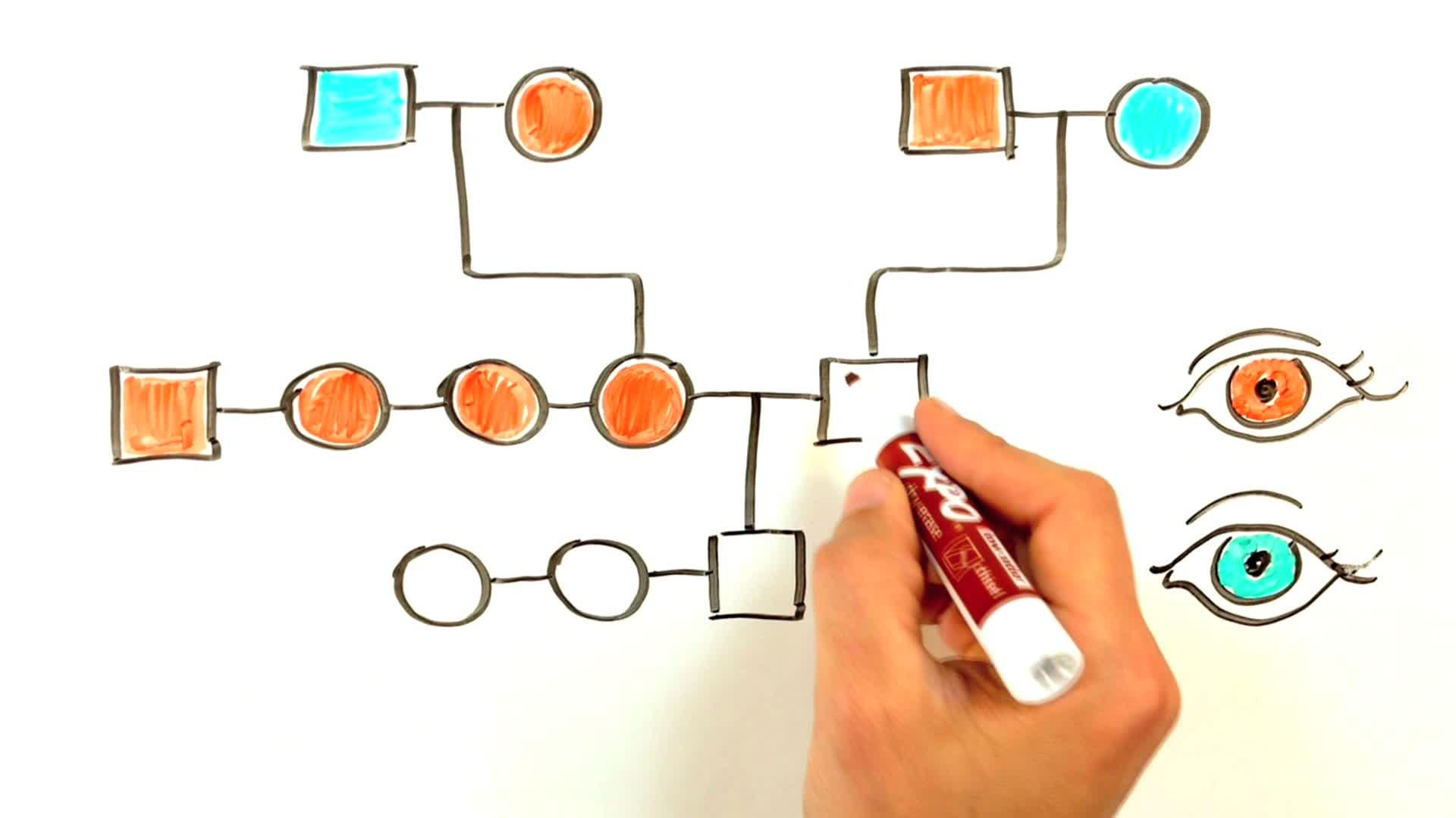 Make a pedigree chart diy pooptronica Gallery